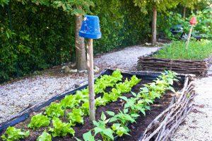 vegetable garden jar