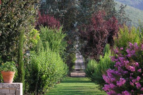garden entrance tree