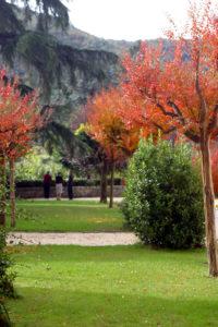 garden tree red