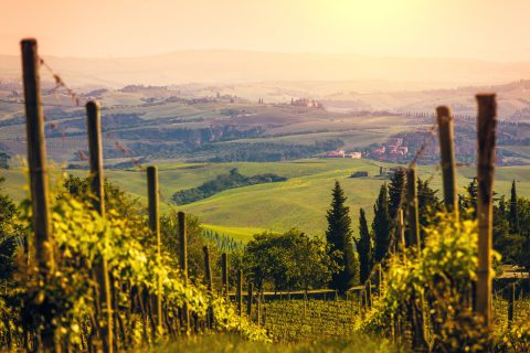 wine view tuscany