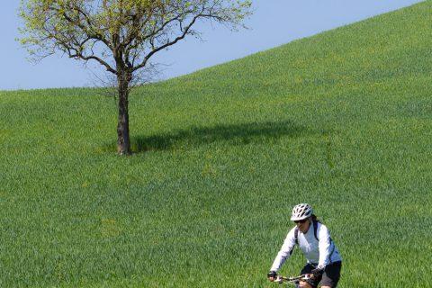 tree green bike